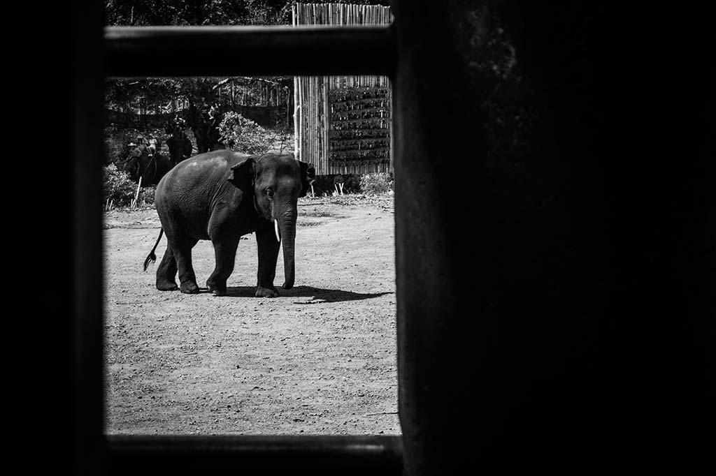 fotografía de viaje Tailandia elefante