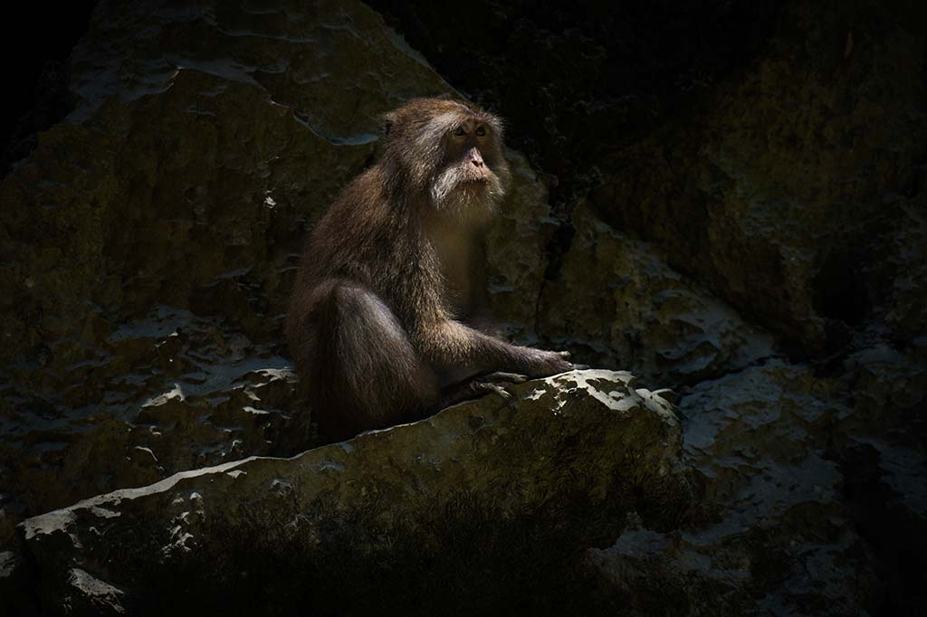 fotografía de viaje Tailandia mono