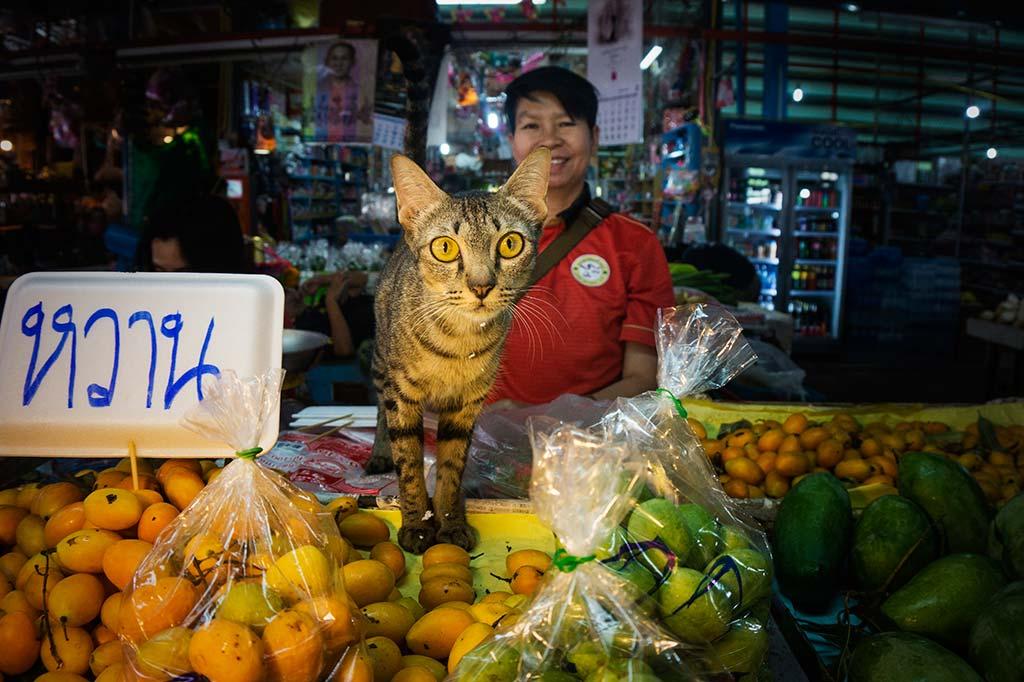 fotografía de viaje Tailandia gato
